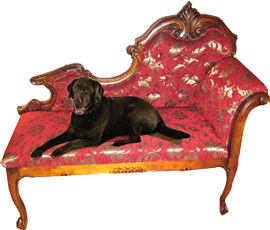 dog on furniture
